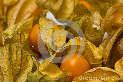Physalis fruits  on a white background