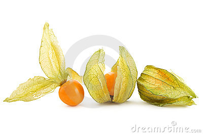 Physalis on white