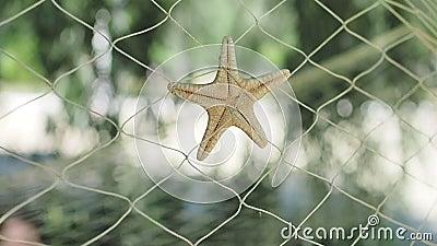 Piękna rozgwiazda w sieciach rybackich kiwa w wiatrze na tle greenery na słonecznym dniu element dekoracyjny zbiory