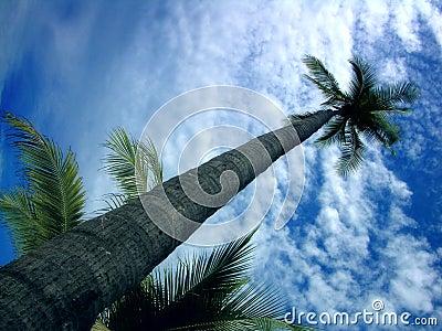 Piękne niebieskie niebo drzewo kontra palm