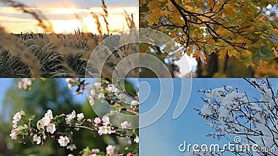 Piękny kolaż cztery sezonu - jesień, zima, wiosna, lato - zbiory wideo