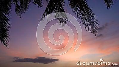 Piękny zmierzch na plaży z drzewkami palmowymi i łodziami zbiory wideo