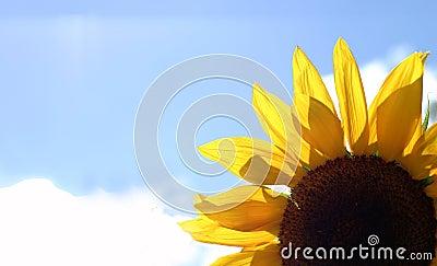 Piękny kwiat bright