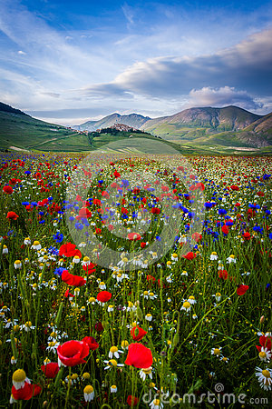 Free Piana Piccola, Castelluccio Di Norcia Royalty Free Stock Photo - 73527665