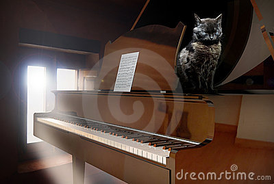 Piano and cat