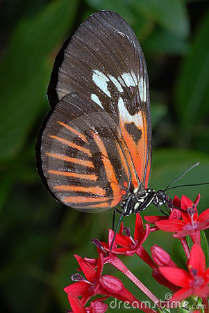 Free Piano Key Butterfly Stock Photography - 7278882