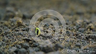 Pianta verde in coltura stock footage