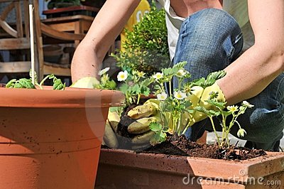 Piantatura dei fiori nel giardino