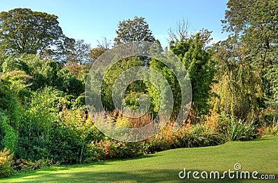 Piante e cespugli di giardino immagini stock immagine for Cespugli giardino