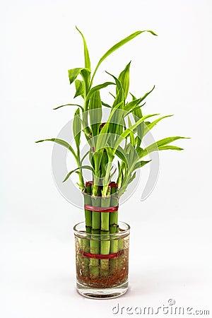 Piante ornamentali fotografia stock immagine 39545781 for Piante secche ornamentali
