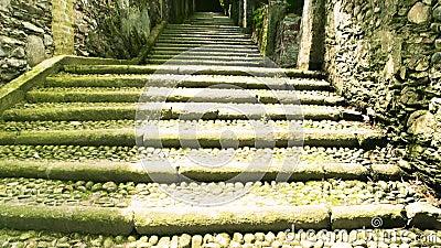 Piante verdi e scale di pietra stock footage