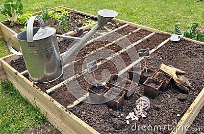 piantine nel quadrato del giardino fotografia stock - immagine ... - Piccolo Giardino Quadrato