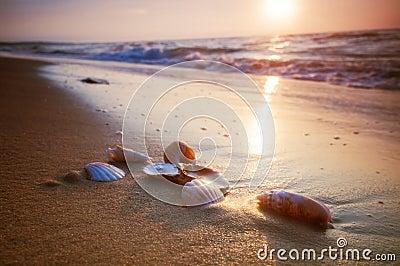 Piaska morza skorupy