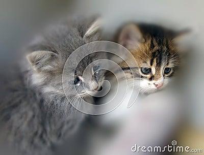 Piccoli gatti