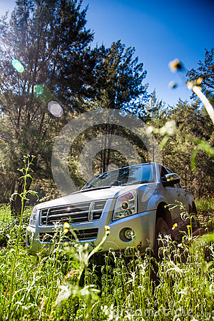 Pick-up truck and long grasses
