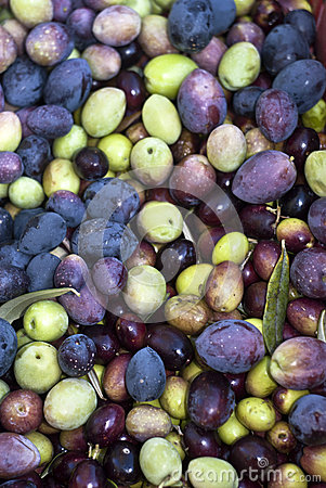 Picked olives and leaves