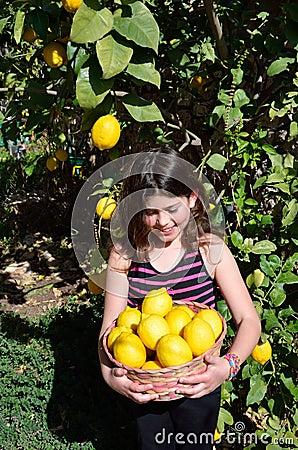 Free Picking Lemons Royalty Free Stock Photos - 37880558