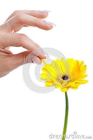 Picking a petal