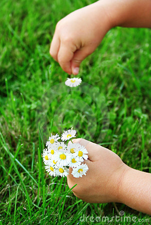 Free Picking Up Daisies Stock Photos - 2658353