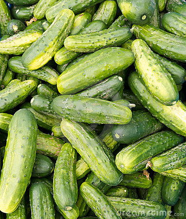 Pickling cucumbers or pickles on display