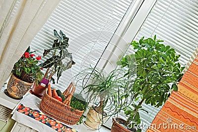 Picnic basket and flowerpots on window