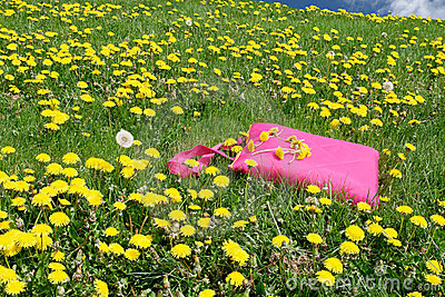 Picnic blanket in meadow