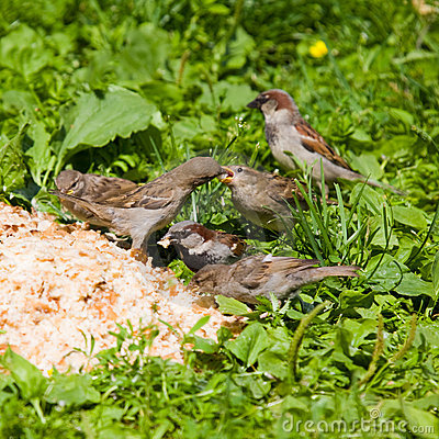 Free Picnic For Sparrows Royalty Free Stock Photo - 8610685