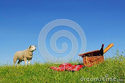 Picnic sheep