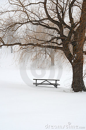 Free Picnic Table In Snow Under A Tree Stock Image - 3982171