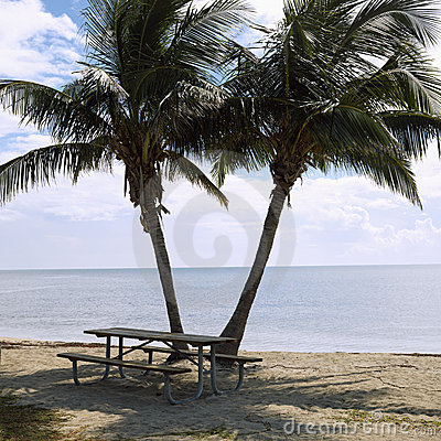 Picnic table with palm trees
