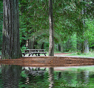Picnic Table in Redwood Forest