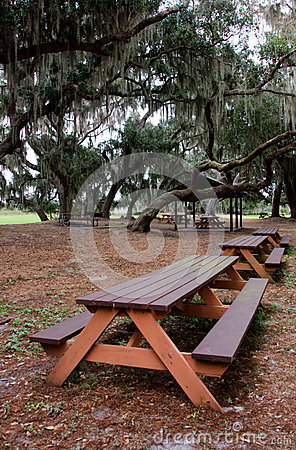 Free Picnic Tables Under Hanging Spanish Moss And Live Oaks Royalty Free Stock Photo - 37159805