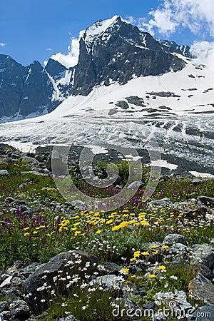 Pico Das Flores E De Montanhas