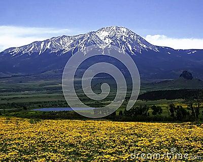 Pico espanhol ocidental