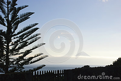 Pico with tree silhouette