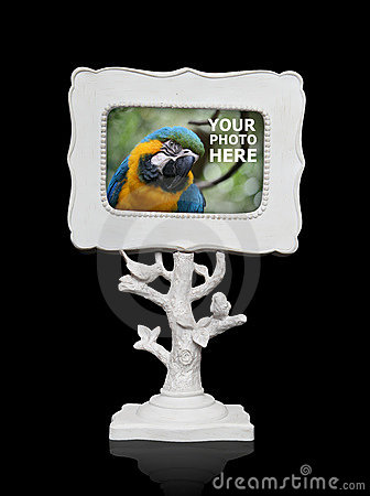 Picture Frame (Bird Photo in Frame is Mine)