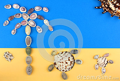 Picture of seashells, tropical beach, palm tree, turtles, sun