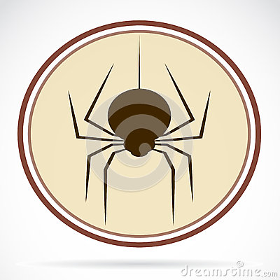 Pictures of brown spiders