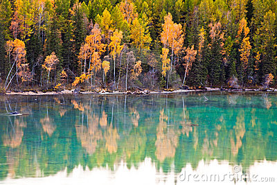 Picturesque autumn landscape of lake and tree