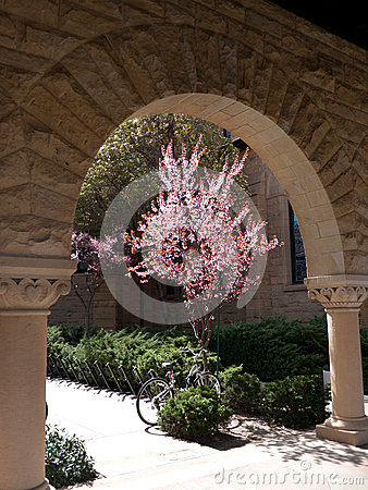 A picturesque corner at Stanford