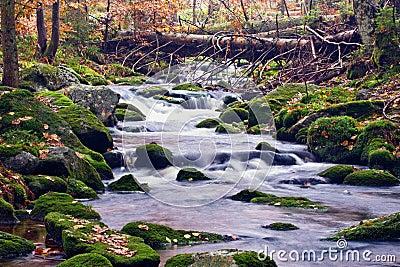 Picturesque stream in wood