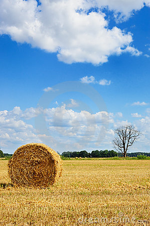 Picturesque view of round hay bale and dead tree