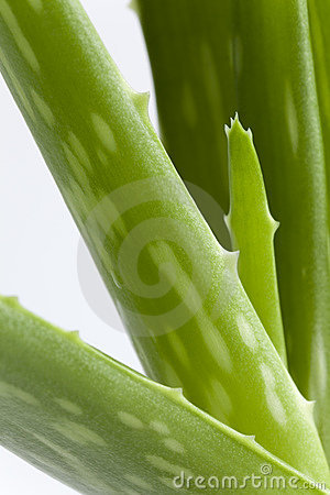 Piece Of Aloe Vera On White Background