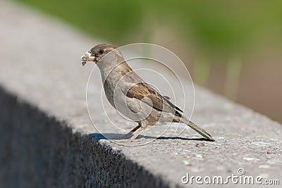Piece of bread in a beak