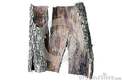 Piece of oak s bark