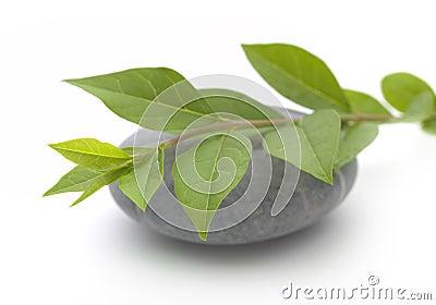 Piedra y hojas