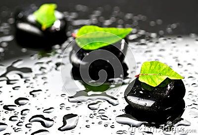 Piedras negras con las hojas verdes