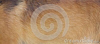 Piel del perro