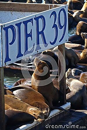 Free PIER 39 & Sea Lion Royalty Free Stock Photos - 11145988