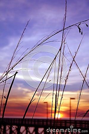 Pier Grass